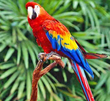 parrot parrot parrot 602 493 7387 amazon parrot macaw